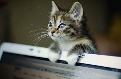 かまって猫