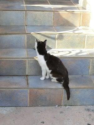 フリウル猫