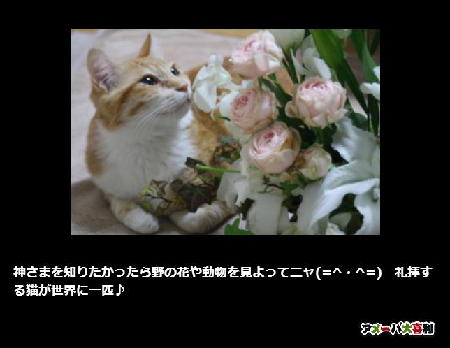 神さまを知りたかったら野の花や動物を見よってニャ(=^・^=) 礼拝する猫が世界に一匹♪