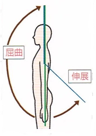 肩の伸展・屈曲