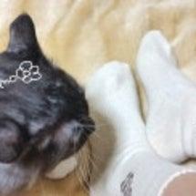 羊毛靴下とネコちゃん…