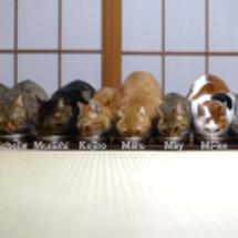 今日も並ぶ10匹の猫
