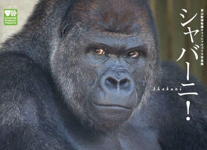 イケメンゴリラ 動物園