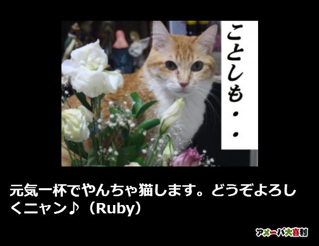 元気一杯でやんちゃ猫します。どうぞよろしくニャン♪(Ruby)
