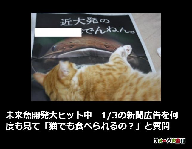未来魚開発大ヒット中 1/3の新聞広告を何度も見て「猫でも食べられるの?」と質問