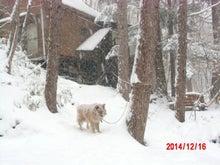 2014-12/16 大雪
