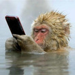 お猿さんで一言