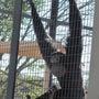 東山動物園で