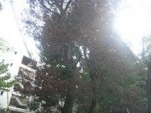ナラ枯れの被害を受ける保存林ー奈良県奈良市2