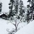 初雪とキムチ鍋