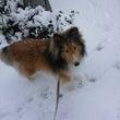 雪、ユキ、ゆきー!