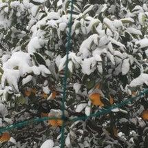 太良町も大雪です☃