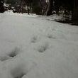 まだ雪が残ってます