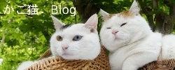 かご猫Blog