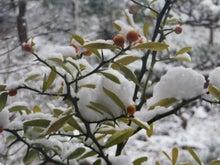 雪キンカン3