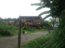 organic cafe1