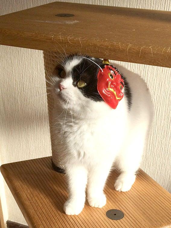 鬼猫三花子