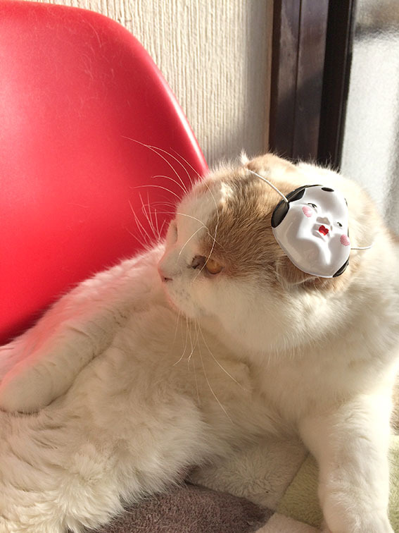 おかめ猫昌三
