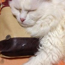 我が家の姫猫のこと