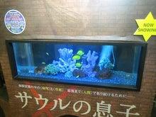 水槽の展示