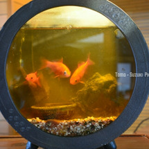 金魚鉢 by 北海…