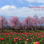 春の旅行①山中湖〜田…