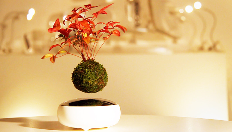 「Air Bonsai」