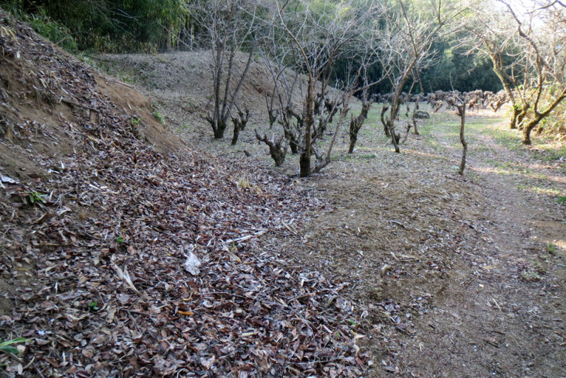 明徳寺城④郭と土塁