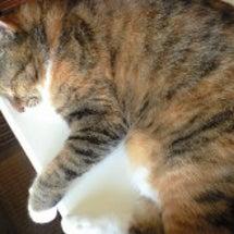 猫ぞー 寝っこけて…