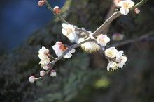 祇園白川5