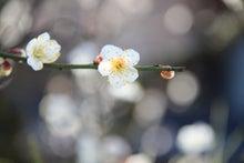 祇園白川6