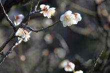 祇園白川4