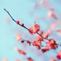 ☆春に向けて☆