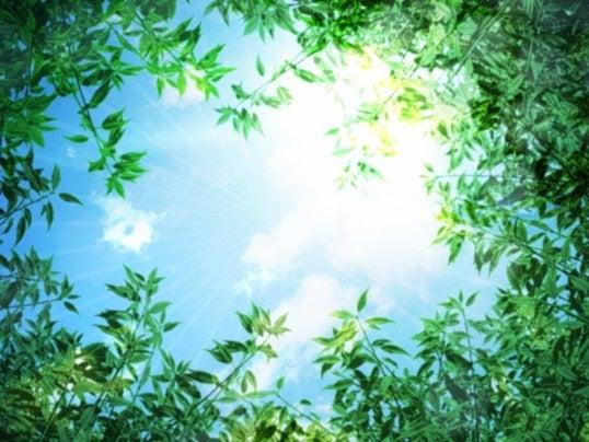 葉と空 潜在意識