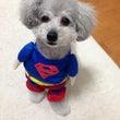 ぼくはスーパーマン