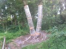 ナラガレ対策 ビニール被覆の実施 奈良県3