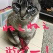 *癒しの猫*猫の日だ…
