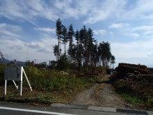 太陽光発電所建設のため伐採された赤松林