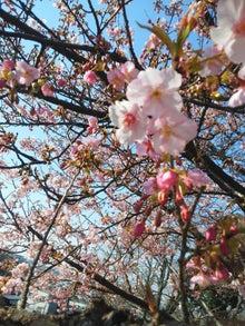 桜もどき?梅