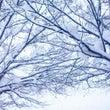 やさしい雪