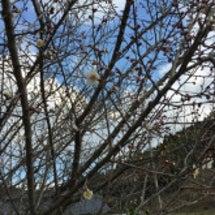 山都町にも春の兆し♪…