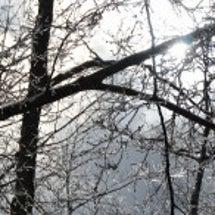 樹氷より霧氷降る青木…