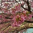 春よこい春よこい