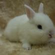 入荷情報♪【ウサギち…
