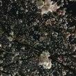 桜咲く上野