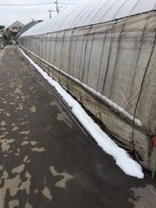 2月29日先日の雪