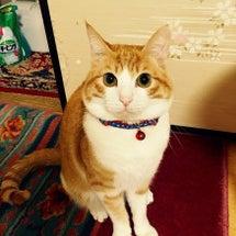マスコット猫「広太」…
