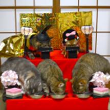 猫の雛人形