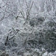 滋賀県は雪