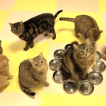 便利な猫トイレ
